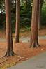 Strength endures progress<br /> Pine Banks Park