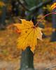 Season's end<br /> A Daily photo selection 11/1/09<br /> Pine Bank Park