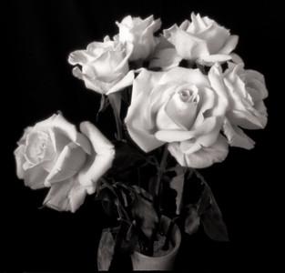 Roses, pinhole photograph