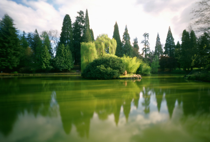 Island in the lake at Laurelhurst Park No. 2, Portland, Oregon.