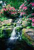 Waterfall, Rhododendron Garden, Portland, Oregon.