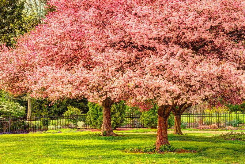 Inniswood Spring