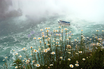 Daisies above the Maid of the Mist, Niagara Falls