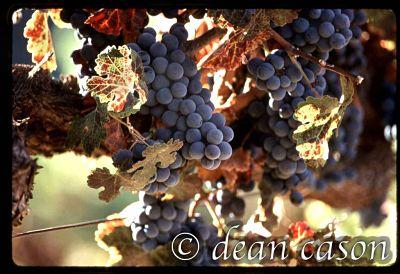 Cain Vineyards, Napa Valley, CA