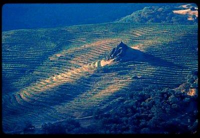Cain Vineyards, St. Helena, Napa Valley, CA