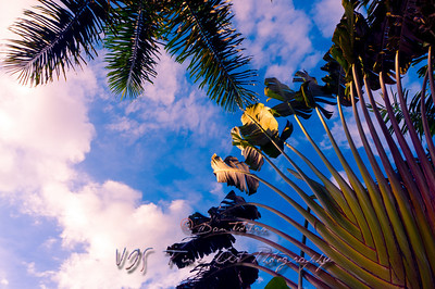 Palm Tree and the Blue Sky