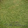 Smooth Green Grass