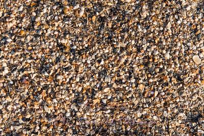 Ocean beach shells