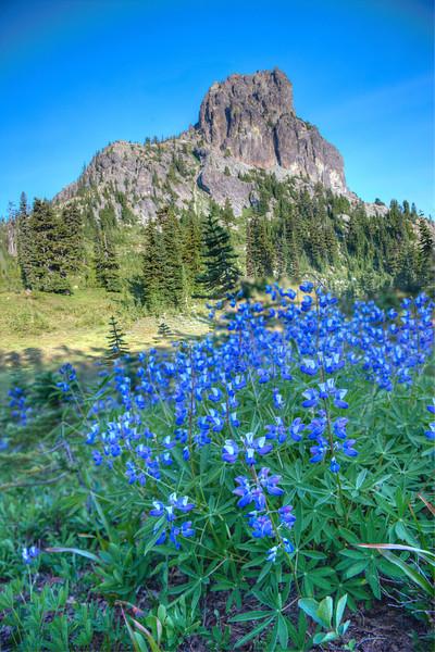 Cathedral peak alpine flowers