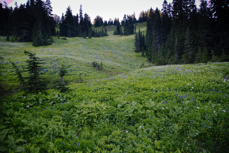 Meadow above Trapper Creek