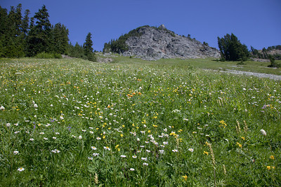 Meadow below Huckleberry
