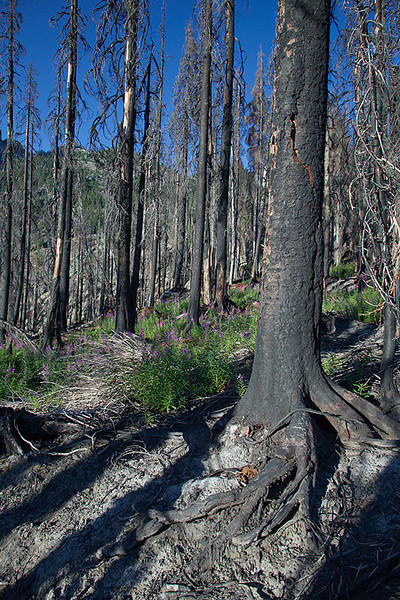 through the Delate creek burn area