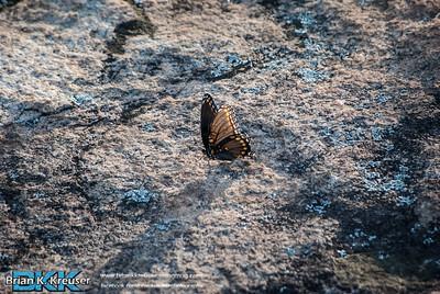 Arabia Mountain 10022013