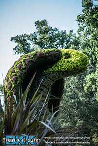 Atlanta Botanical Gardens