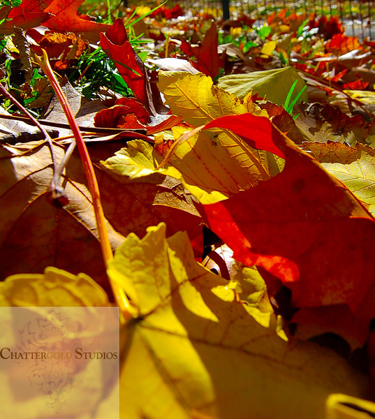 Laying in the Leaves .  This Image is © Tricia Chatterton Goldrick/Chattergold Studios.  All Rights Reserved.  No duplication without permission (see commercial downloads).  This image may be downloaded from this website for blogging purposes only.
