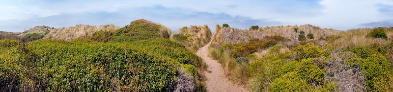 beach path4 copy