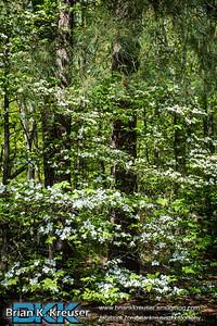 Dauset Trails 04202014