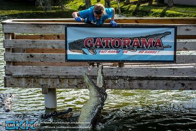 Gatorama_01112015