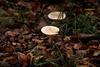 Herbst-Impressionen #03: Pilze