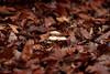 Herbst-Impressionen #01: Pilze