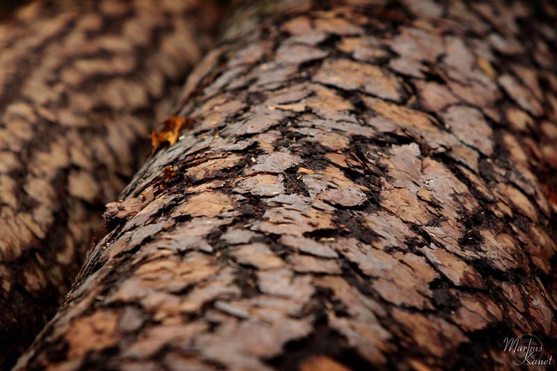 Herbst-Impressionen #04: Baumrinde