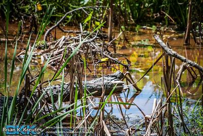 Newman Wetland Center 08252013