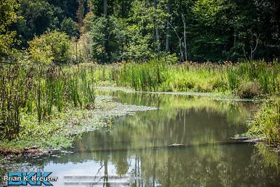 Newan Wetlands Center 08252013