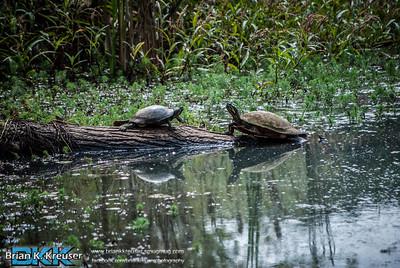 Newman Wetland Center 09292013