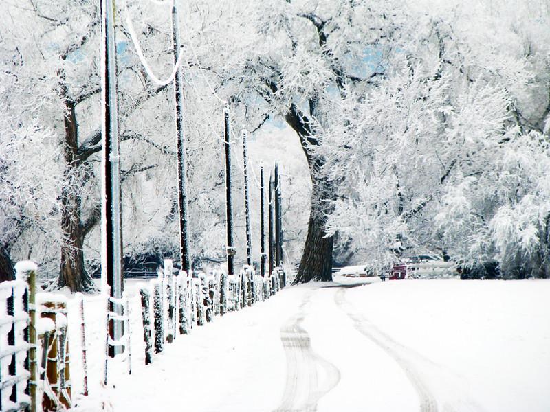 Snowy walk.