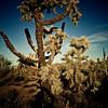 Lost Dutchman State Park, cactus.