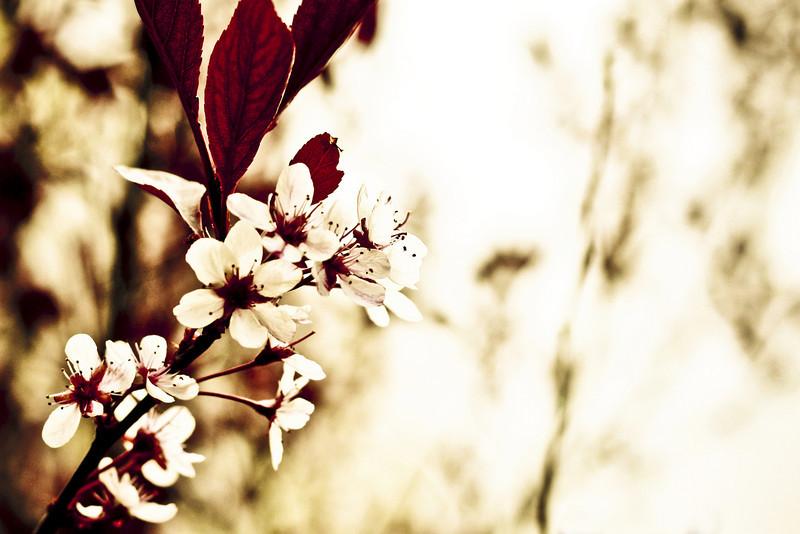 Spring Bloom.