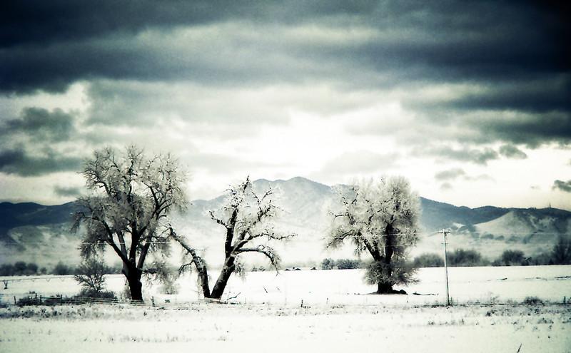 Snowy trio.