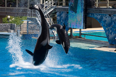 Sea_World-3439