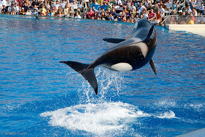 Sea_World-3926