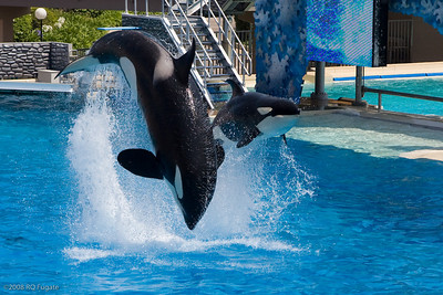 Sea_World-3438