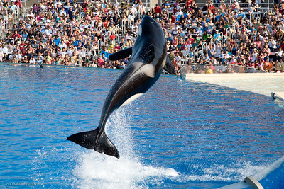 Sea_World-3925