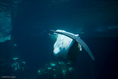Sea_World-3673
