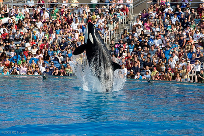 Sea_World-3929