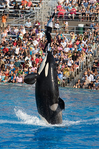 Sea_World-3980