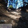 Looking up the path .  This Image is © Tricia Chatterton Goldrick/Chattergold Studios.  All Rights Reserved.  No duplication without permission (see commercial downloads).  This image may be purchased from this website for blogging purposes only.