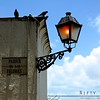 """Parque de las Palomas""<br /> Roughly translated:  ""Pigeon Park""<br /> <br /> Over many years pigeons have come to thrive in this area of historic Old San Juan in Puerto Rico."