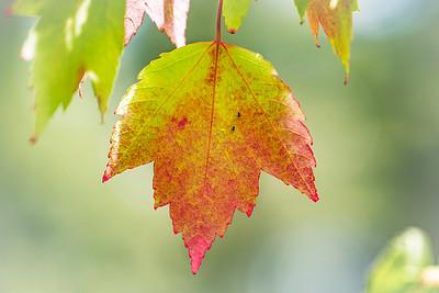 Turning Fall