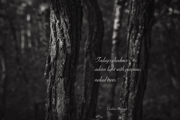Haiku 40