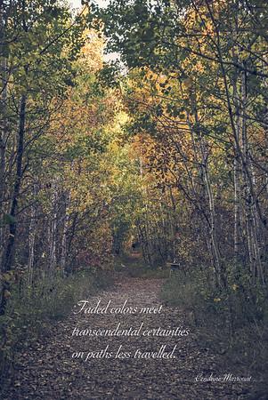 Haiku 30