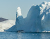Humpback whales feeding near grounding icebergs at the mouth of Ilulissat Icefjord, Greenland