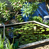 Deckside,  water lily pots are sitting on concrete blocks,