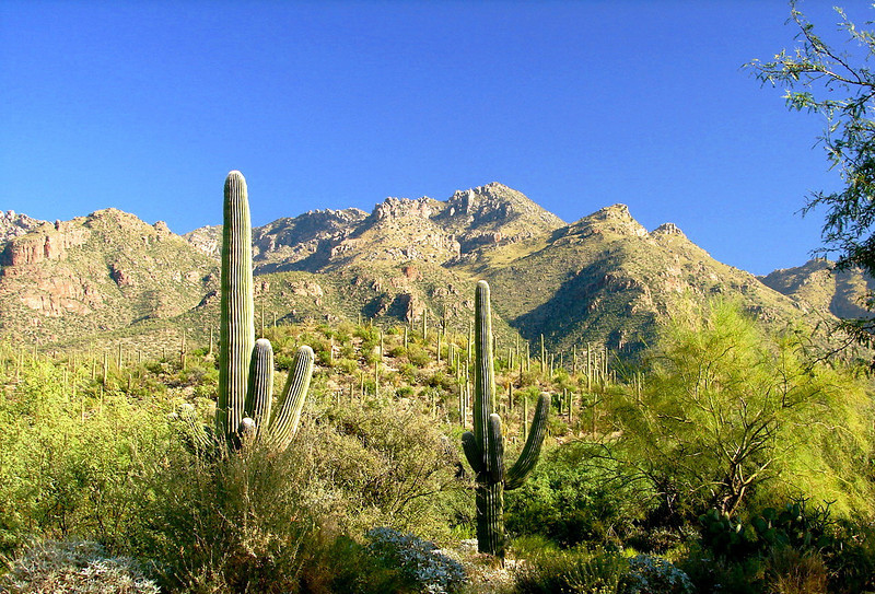 Sabino Canyon - One mile from our neighborhood.