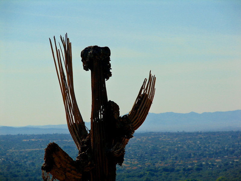 October 2006: Cactus Man - Sabino Mountain, Tucson.