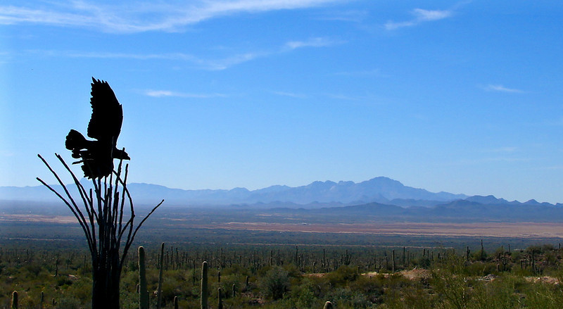 January 2008: Sonoran Desert Museum.