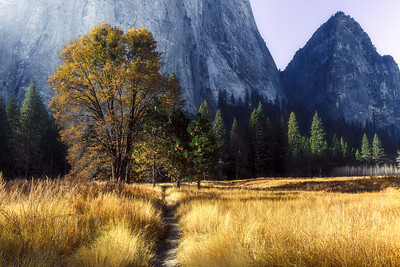 Fall colors in Yosemite National Park
